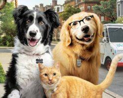 Como cães e gatos 3: Peludos Unidos! filme muito post